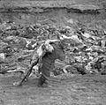 The Liberation of Bergen-belsen Concentration Camp, April 1945 BU4191.jpg