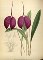 The Orchid Album-01-0074-0024.png