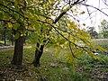 The TNU Botanical Garden in Simferopol, Crimea, Ukraine 32.JPG