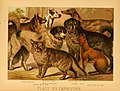 The animal kingdom (Plate XVI) (6129695397).jpg