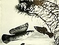 The complete aquarium book; the care and breeding of goldfish and tropical fishes (1936) (20483733990).jpg