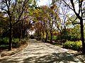 The fall of the Fuyang Park 1.jpg
