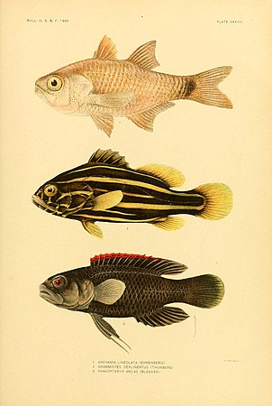 The fishes of Samoa (Plate XXXVIII) (5998447439).jpg
