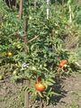 The harvest of 2009. (15345494136).jpg