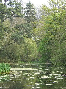 The lake in Wayford Wood - geograph.org.uk - 450686