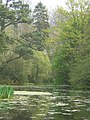 The lake in Wayford Wood - geograph.org.uk - 450686.jpg