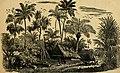 The merchant vessel - a sailor boy's voyages around the world (1884) (14593118478).jpg