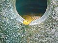 The snake Hole.jpg