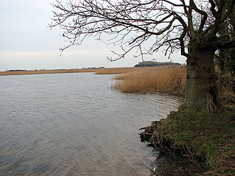Martham Broad - Image: The southeastern edge of Martham Broad geograph.org.uk 1107374