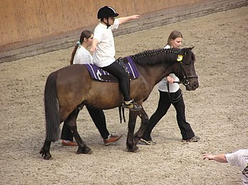 English: Therapeutic horseback riding horse sh...