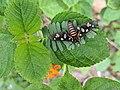 Tiger Moth 4.jpg