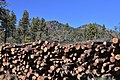 Timber - Kaibab NF - November 2017.jpg