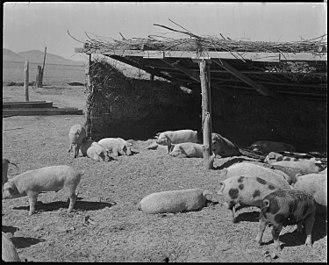 Hog farm where internees raised pork for the camp's kitchen Topaz, Utah. A view of the hog farm, where evacuee workers raise all the pork which is used by the . . . - NARA - 536980.jpg