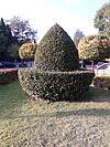 Topiary (01).jpg