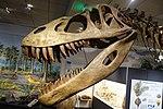 Torvosaurus BYU 2.jpg