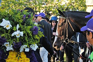 Tourist (horse) - Tourist with the Breeders' Cup Mile bouquet