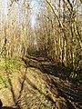 Track through chestnut coppice - geograph.org.uk - 326529.jpg