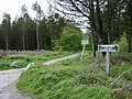 Track to Humber Down, Little Haldon - geograph.org.uk - 1314698.jpg