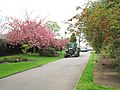 Tractor and Cherry Blossom - geograph.org.uk - 159526.jpg