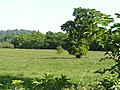 Trees and fields - geograph.org.uk - 182727.jpg