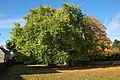Trees in the grounds of Stonesfield School - geograph.org.uk - 1014974.jpg