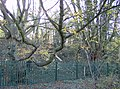 Trees on the railway embankment - geograph.org.uk - 610184.jpg
