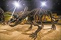 Triceratops-000314.jpg