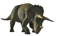 Triceratops0225c.jpg