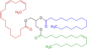 Fat - Example of a natural triglyceride with three different fatty acids. One fatty acid is saturated (blue highlighted), another contains one double bond within the carbon chain (green highlighted). The third  fatty acid (a polyunsaturated fatty acid, highlighted in red) contains three double bonds within the carbon chain. All carbon-carbon double bonds shown are cis isomers.