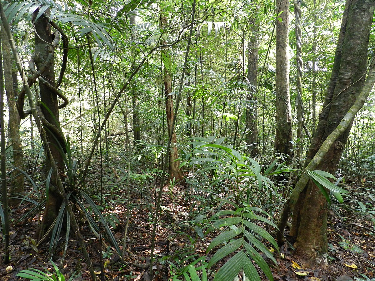 tropical rainforest conservation wikipedia