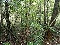 Tropical rainforest Agumbe.jpg