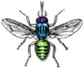 Tsetse fly.png
