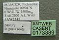 Typhlomyrmex pusillus casent0173389 label 1.jpg