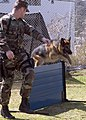 US Navy 070314-N-0483B-002 Master-at-Arms 2nd Class Howard Avery trains Jack, a military working dog, as he jumps over a low wall of an obstacle course.jpg