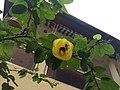 Une abeille dans une fleur.jpg