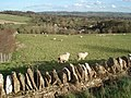 Upper Slaughter sheep pasture - geograph.org.uk - 455448.jpg