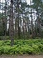 Valdaysky District, Novgorod Oblast, Russia - panoramio (442).jpg