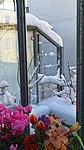 Valentinhaus-Gärten im Winter 09.jpg