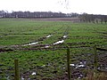 Very Boggy Field - geograph.org.uk - 353584.jpg
