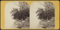 View on Cayuga Lake at Aurora, from Robert N. Dennis collection of stereoscopic views.png