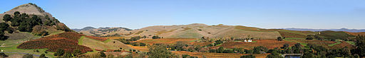Vineyards of Napa Valley panorama