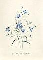 Vintage Flower illustration by Pierre-Joseph Redouté, digitally enhanced by rawpixel 56.jpg
