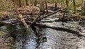 Wandeling over het Hulshorsterzand-Hulshorsterheide 07-03-2020. (actm.) 22.jpg