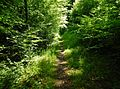 Wanderweg - panoramio (68).jpg
