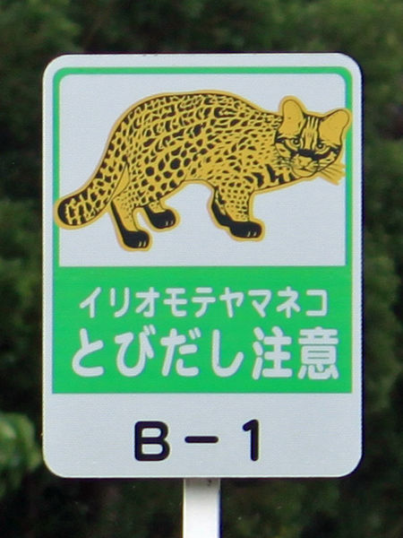 File:Warning sign for iriomote cat.jpg