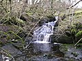 Waterfall in the wooded New Close Gill - geograph.org.uk - 643842.jpg
