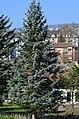 Weinegg - Weineggstrasse 2014-03-08 14-14-00.JPG