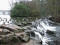 Weir, Clumber Park - geograph.org.uk - 653654.jpg