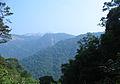 Western Ghats Vegetation - View en route Kottiyoor to Mananthavady11.jpg