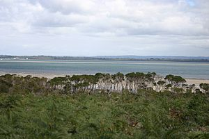 English: Western Port, Victoria looking west f...